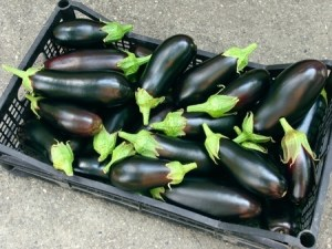 Aubergines in a black plastic vegetable tray sitting on the floor.