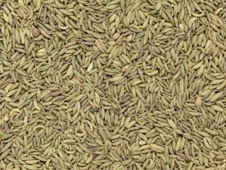Organic aniseed pimpinella anisum closeup background texture.