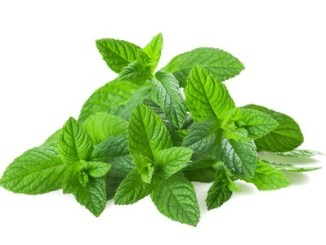 Fresh peppermint isolated on white background