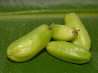 Averrhoa bilimbi fruit on a green leaf.