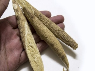 60839348 - astragalus root