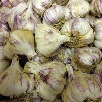 Iberian Wight bulbs.