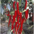Chilli Fuego - red fruits.