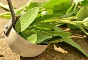 Sage leaves in a copper ladle.