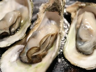 Open oysters in their shells.