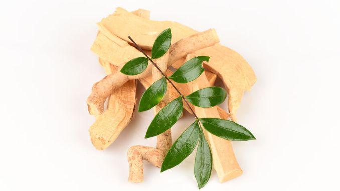Tongkat Ali root and leaves