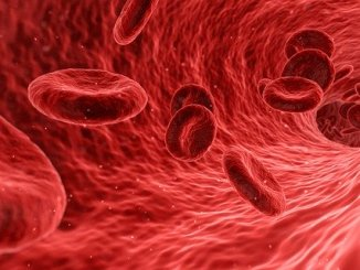 Red blood cells containing a cytoskeleton to keep them together.
