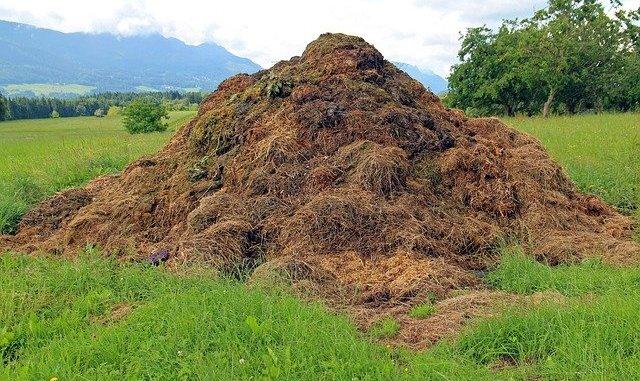 Solid-state fermentation, a dung heap.