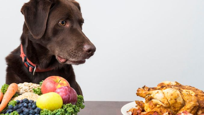 Dog with vegan and meat food. Pet food