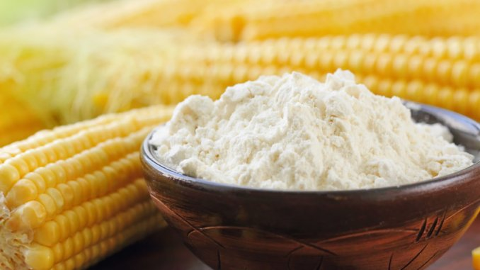 Corn flour in a bowl and corn cob on the table, starch from corn, starch gelatinization