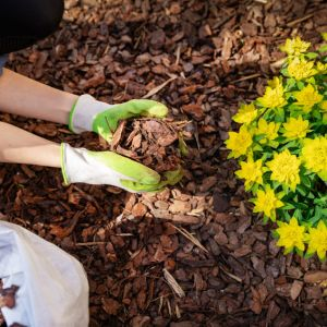 Compost and Mulch