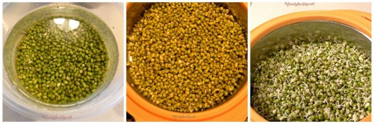 homemade moong beans sprouts