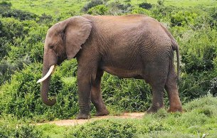 Addo Elephant Park © Rob Philpott