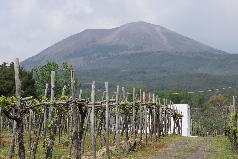 Lacryma Christi vineyard Vesuvius in background