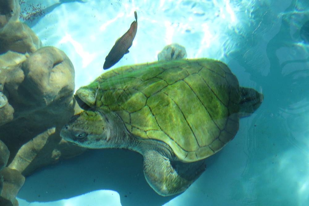 Salvador And Turtles