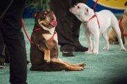 rescue dogs hallmark