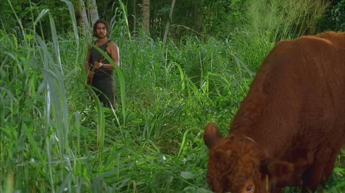 enter 77 red heifer sayid