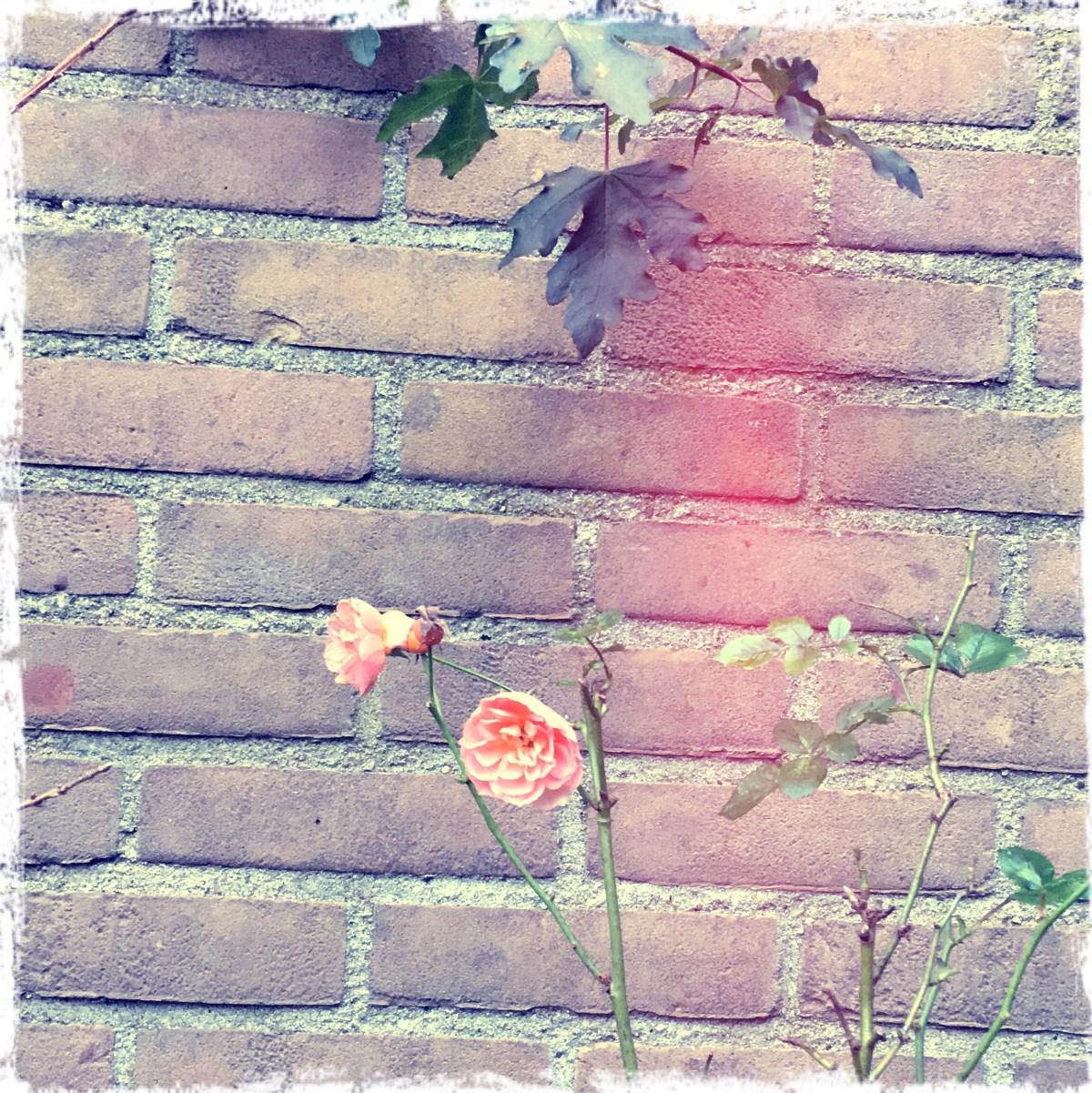 vintage foto's met pixlr-o-matic app