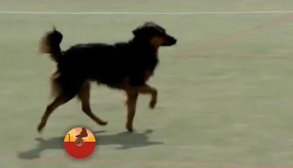 Dog scores goal at far post