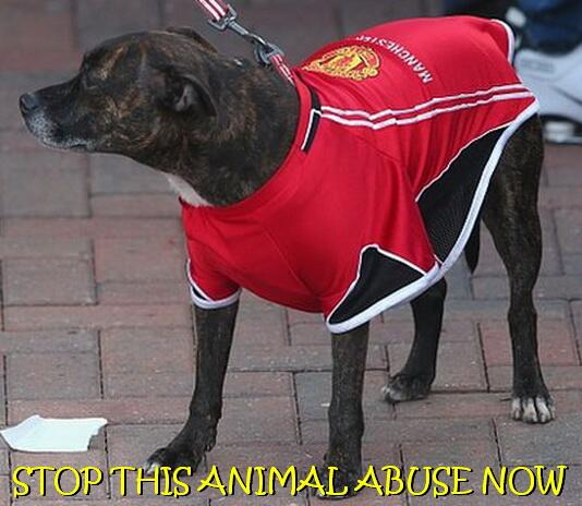 A dog in one of the best Manchester United jokes after the 2-1 Sunderland Capital One Cup semi-final loss
