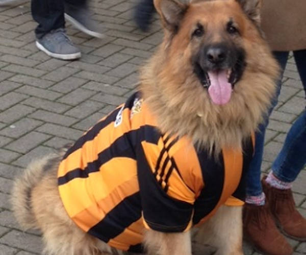 This dog would enjoy the jokes after Premier League new boys Hull beat champions Leicester on the opening day of the season