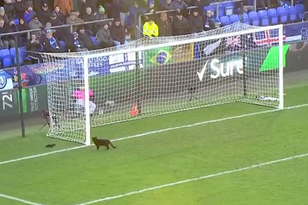 There were Everton cat jokes and tweets after this pitch invasion during their game against Wolves