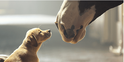 GarbageTalk: The SuperBowl Commercials - My Interview with Budweiser's Marketing Spokesperson