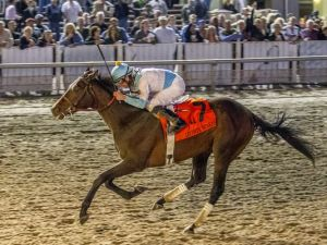 Horse - Kentucky Derby