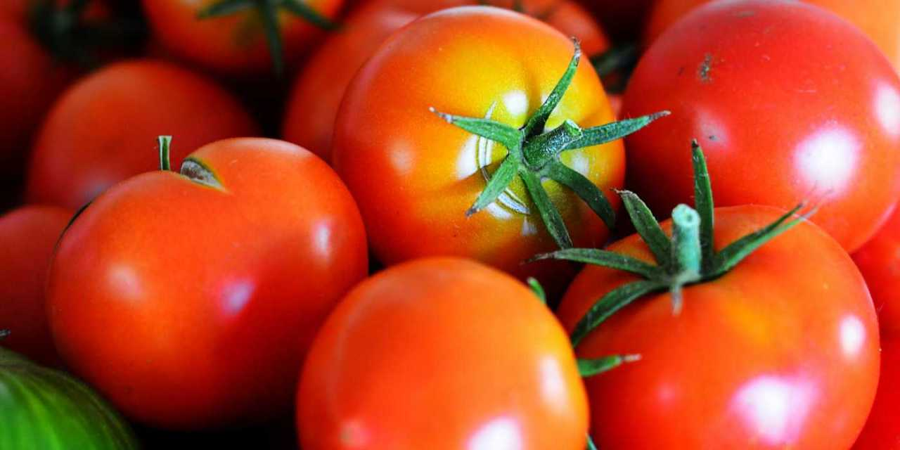 Working with tomatoes