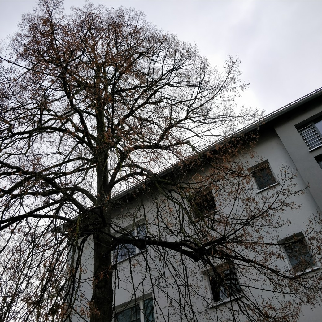 Winters in Constance