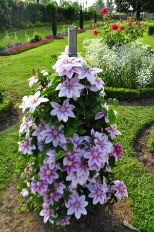 Unknown Bloom in Mughal Garden