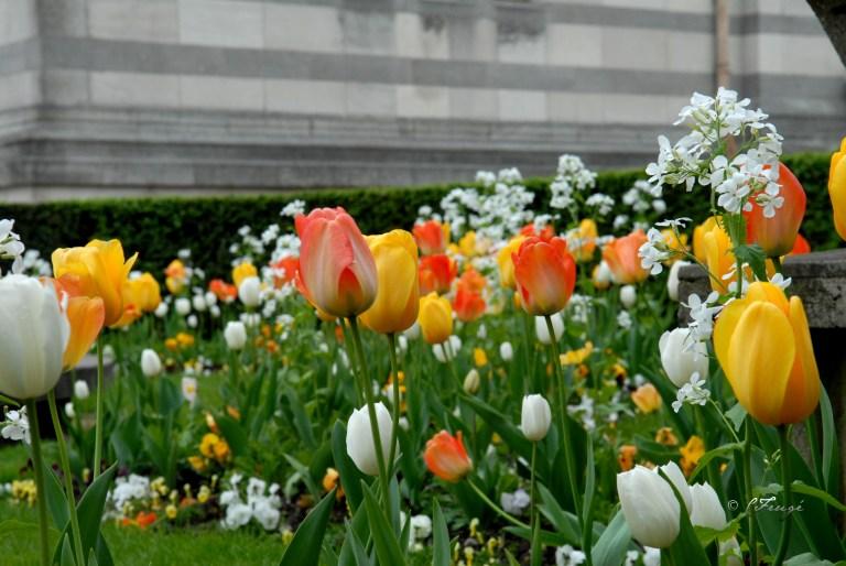 DSC_0055_tulips4web