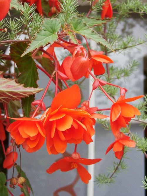 Flowers at Kenton