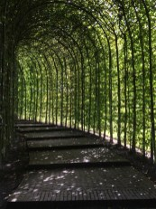 The Alnwick Garden shaded paths