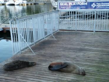Cape Town seal platform
