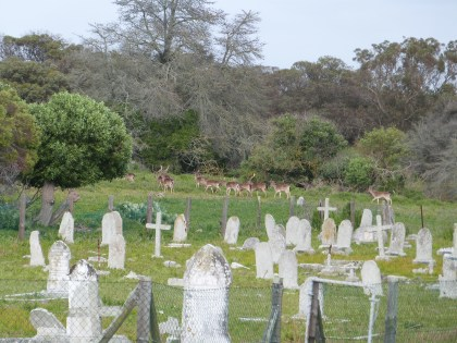 A herd beyond the graves