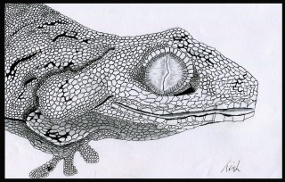 A gecko that I drew with my foot.