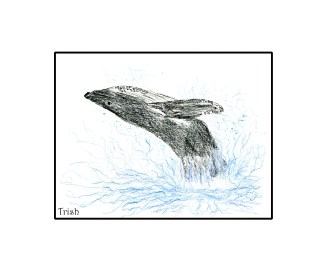 Foot-drawn whale.