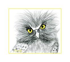 foot drawn Owl.