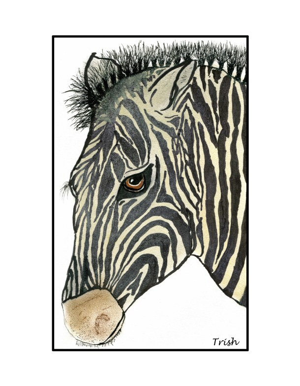 zebra, foot-drawn, ink and pastels.