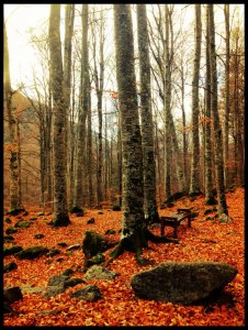The Rila Mountains were incredible in Autumn..