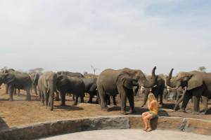 Getting up close and personal to the elephants at Elephant Sands campsite..