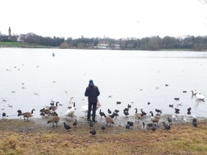 Man feeding geese and ducks at Edgbaston Reservoir