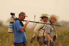 Birding Holidays in Gambia