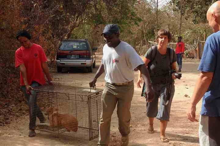 Footsteps eco-lodge Gambia | charity | ACA TNR dog rescue