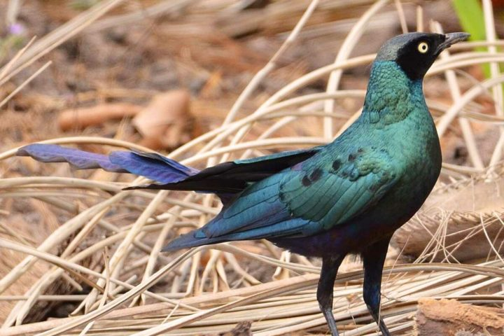 Gambia activities | Birding Gambia