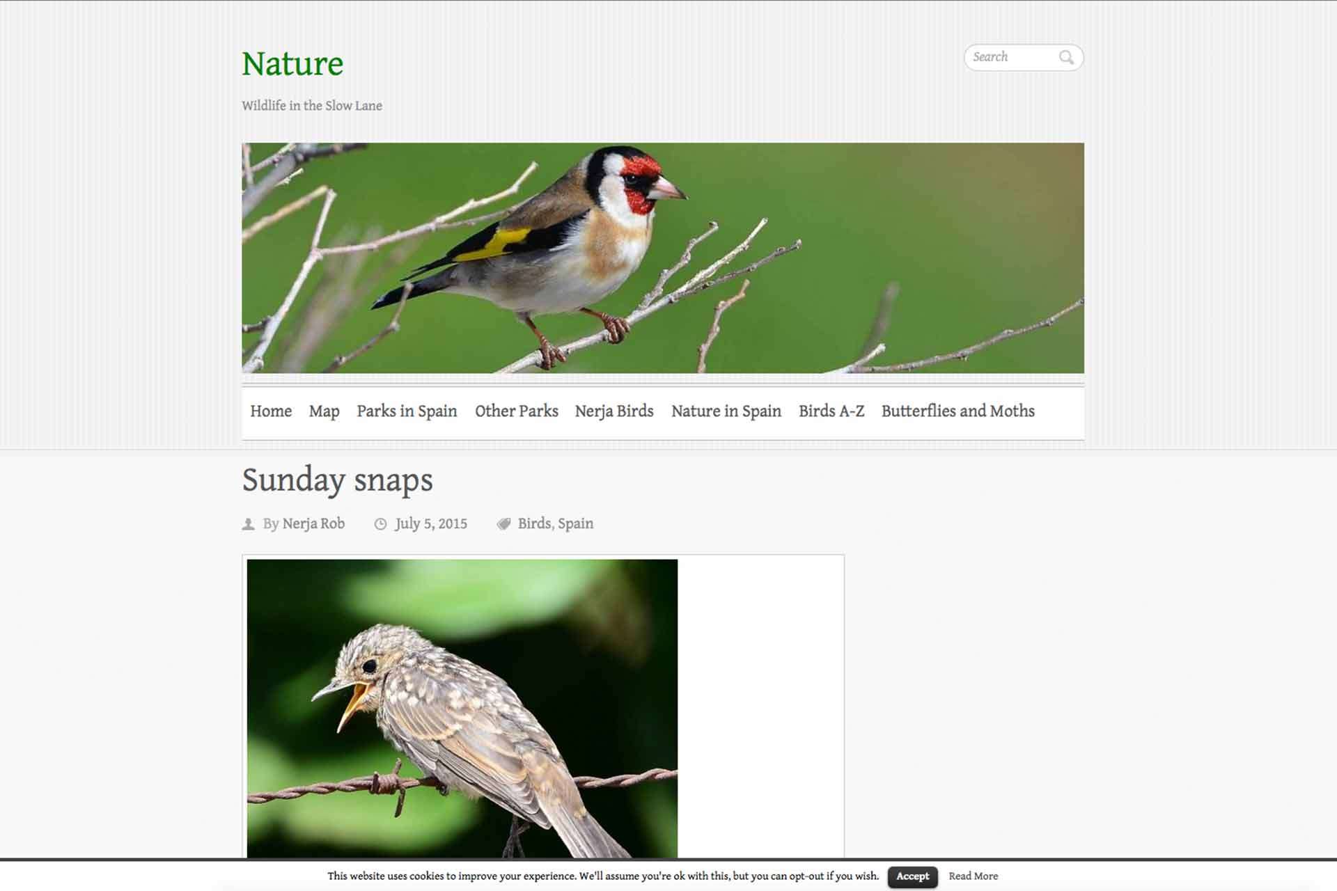 Gambia birding | website Rob Garner