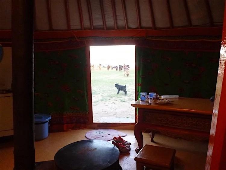 Cabras na Mongólia
