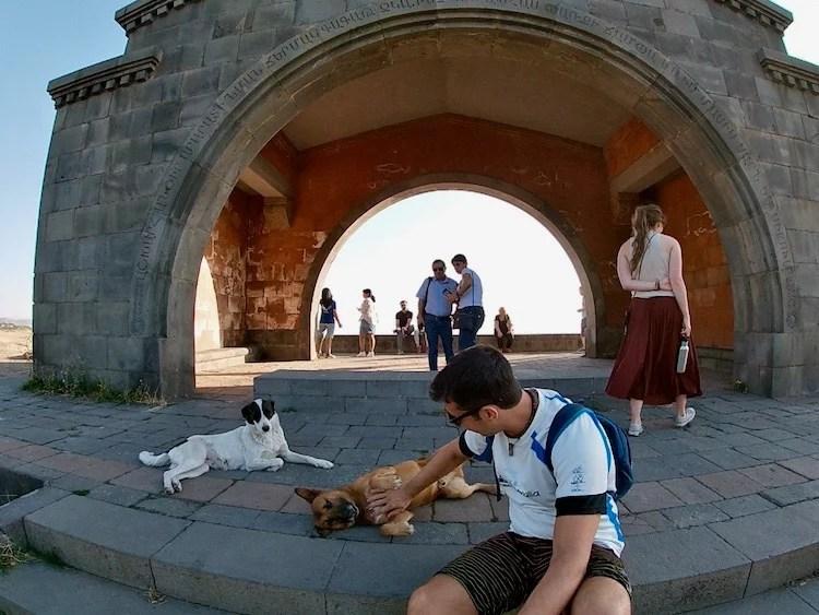 Cachorros Armenia