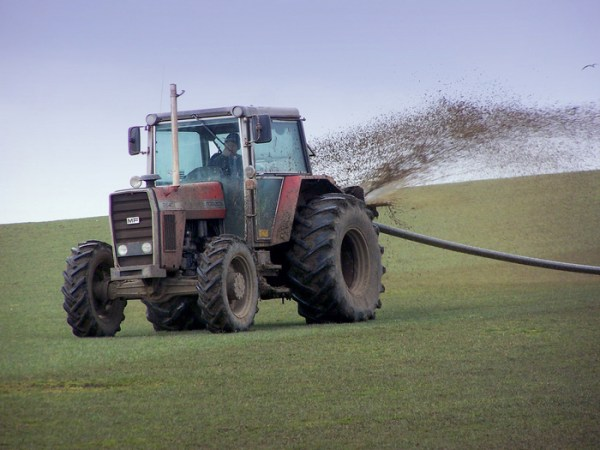 Nitrate toxicity in horse hay or haylage